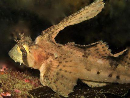 wilson-diving-gallery
